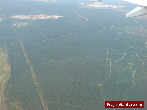 Everything that is green in this photo are palm oil plantations!